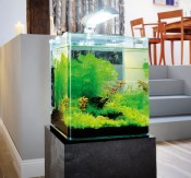 Assortiment Nano aquarium