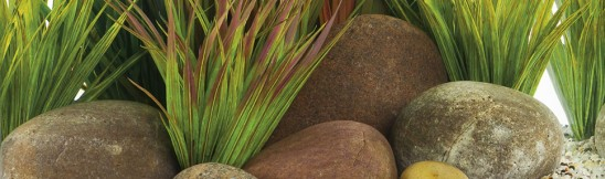 waterplanten voor je aquarium advies van hornbach. Black Bedroom Furniture Sets. Home Design Ideas