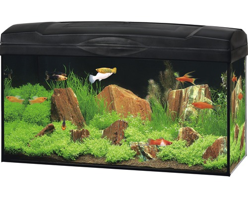 hagen aquarium marina basic 54 60 x 30 x 30 cm kopen bij. Black Bedroom Furniture Sets. Home Design Ideas